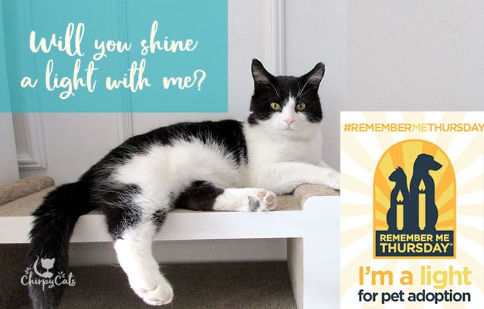 Don't let time run out for yet another helpless shelter pet. Adopt a pair of furry paws to save a life.