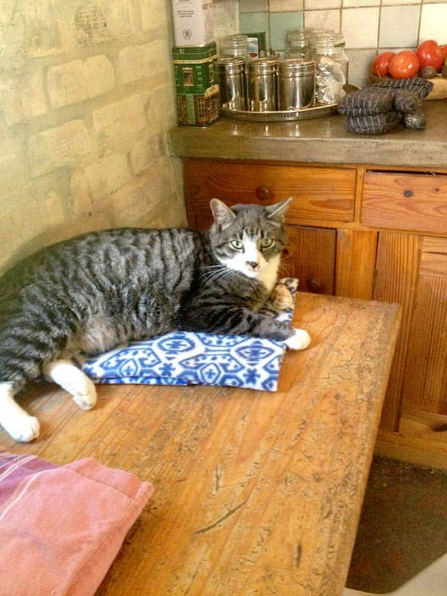 Big Ben resting in the kitchen at the TUFCAT Home For Life Sanctuary