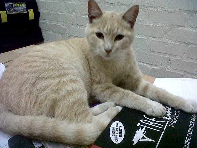 Pietie the cat, dumped at the campus in 2008 loves to stretch out on the office desk.