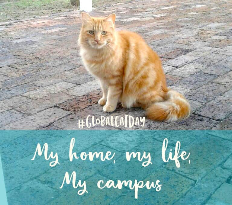 TUFCAT Feral cat project at the UWC campus in cape Town South Africa