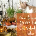 Create a Spooky-licious Cat Salad Bar that's frightfully easy with colorful water beads