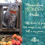 Pumpkins, Bow Ties and Meowvelous Monday Haiku
