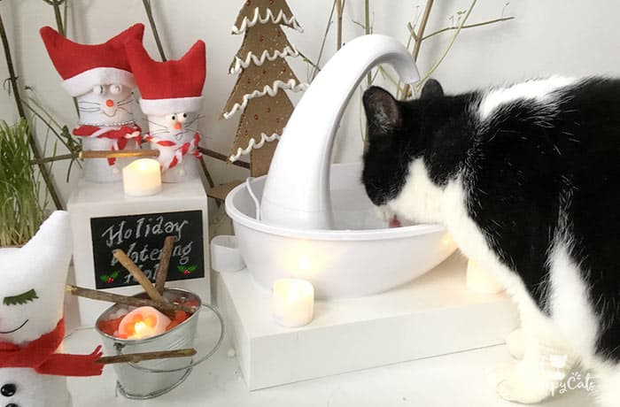 tuxedo cat drinking from the swan fountain holiday display