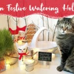 Create a festive cat fountain display to enrich your cat's senses