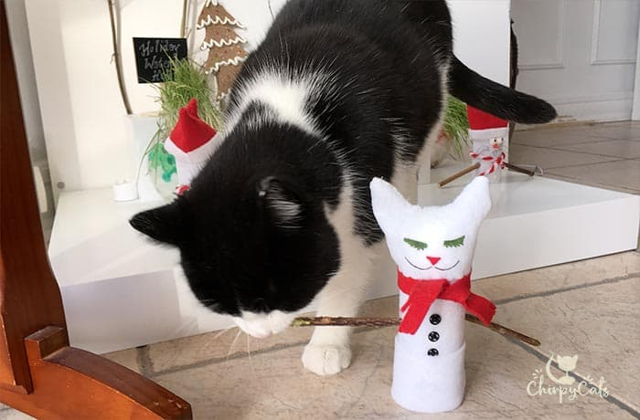 cat chewing on cat vine snowman cat toy