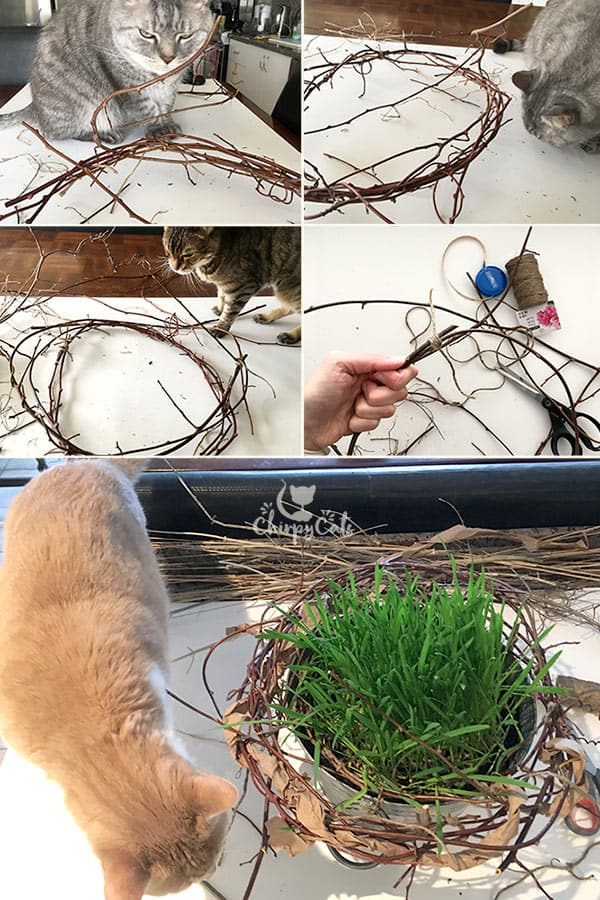 Making a bird's nest for a Spring Cat Oasis