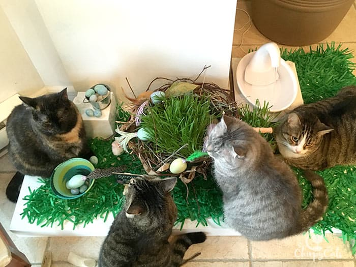 multiple cats surround an indoor Spring Oasis of cat grass and homemade cat toys