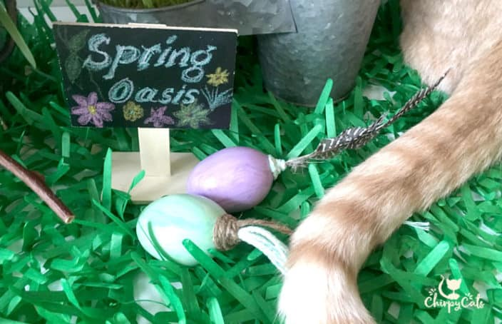 Spring Easter cat grass oasis for your cat