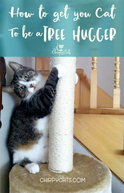 Cat likes scratching the cat tree