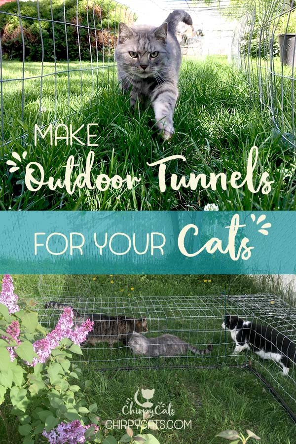 How to make outdoor cat tunnels to increase your cat\'s territory