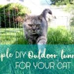 How to make outdoor cat tunnels to increase your cat's territory