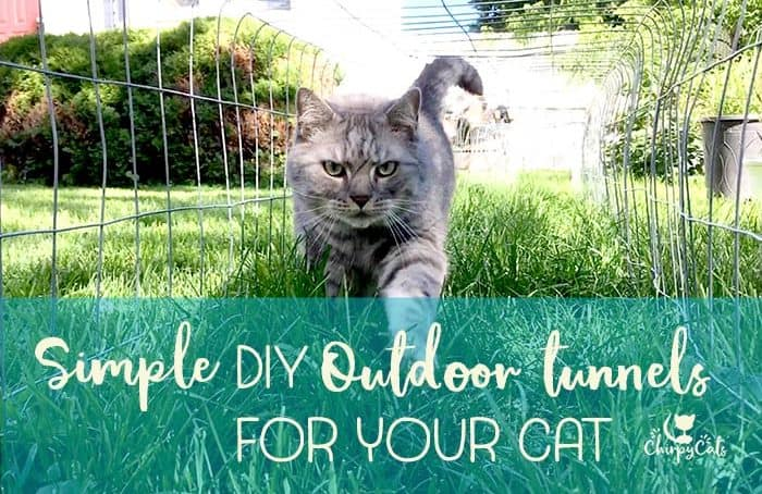Cat walking in diy outdoor cat tunnels on grass