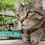 The truth about Cat World Domination and why we need to keep our paws on the pulse