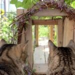two tabby cats sitting and gazing at the catio tunnel entrance