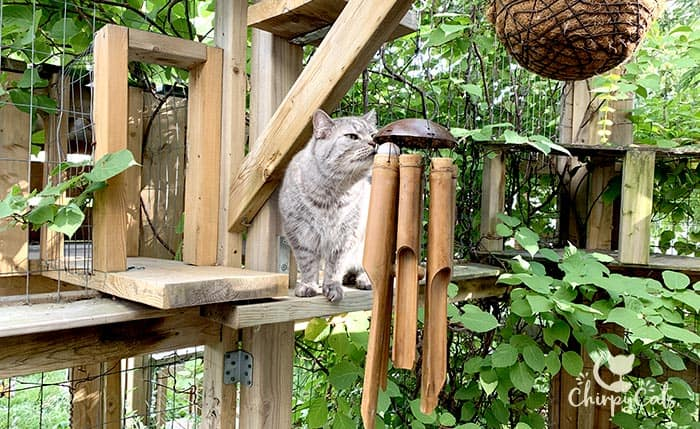 grey tabby cat sniffing the bamboo wind chime