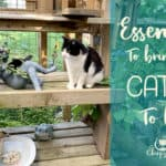 9 Awesome ways to bring your catio to life with these catio accessories
