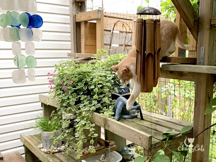 ginger cat leaps from a platform in a catio among a water feature and other garden accessories