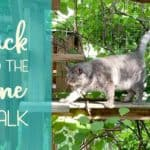 Jack and the Vine Stalk and things we did this summer