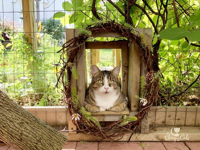 cat relaxing at the entrance to the catnip tunnel decorated with a summer wreath