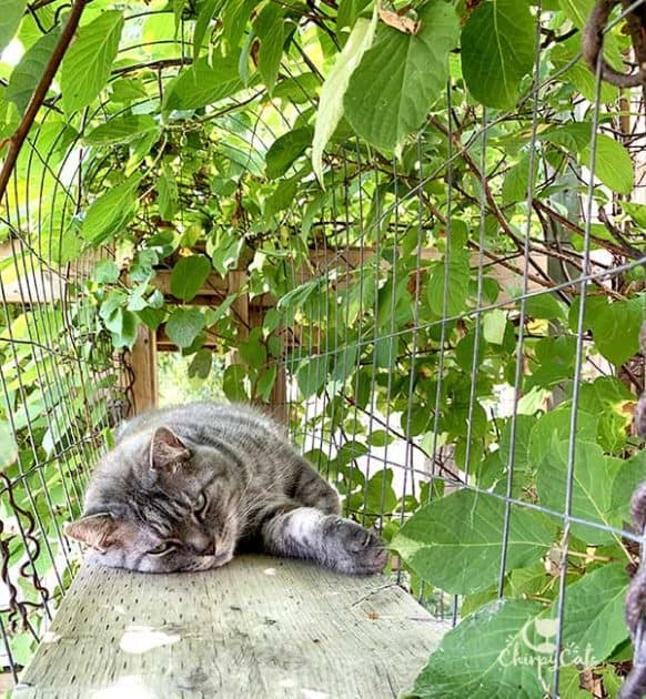 cat sleeping in skywalk tunnel
