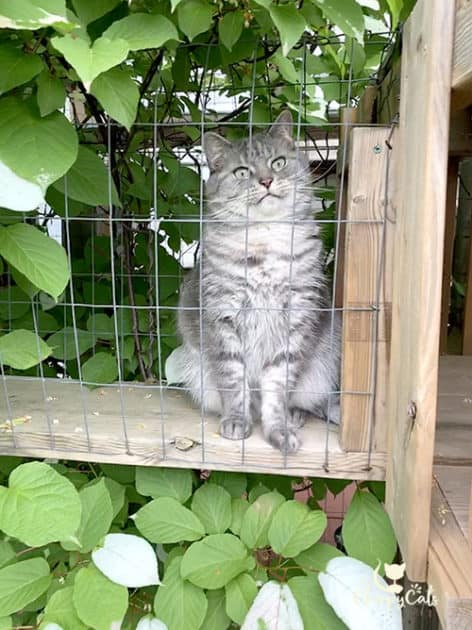 cat sitting in catio tunnel