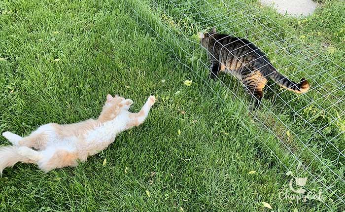 Ginger cat lying on grass