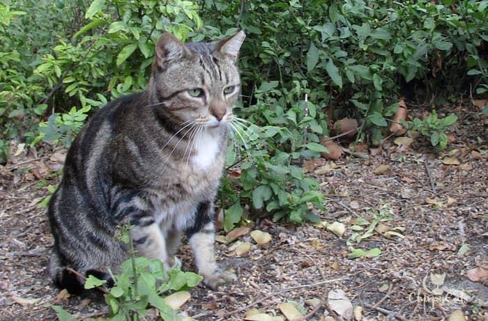 cat sitting among shrubs