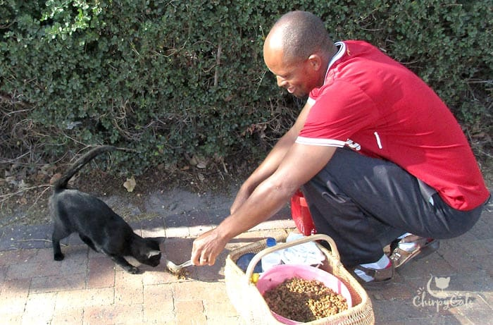 cat whisperer at UWC campus feeds campus cat with spoon