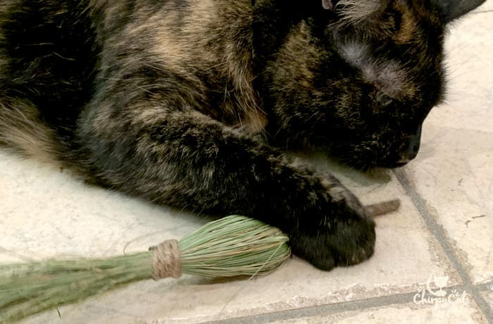 tortie cat playing with mini witches broom cat grass and cat vine toy