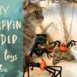 Enhance Your Cat's Playtime with these Frighteningly Cute Pumpkin Spider Toys