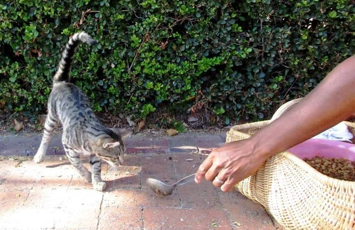 hand reaching out to spoon feed feral cat