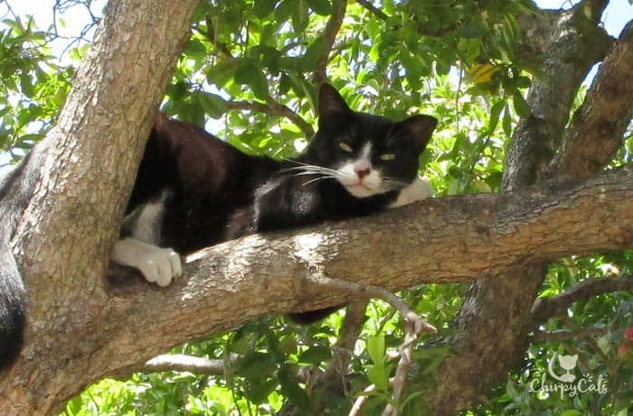 feral cat sitting in tree