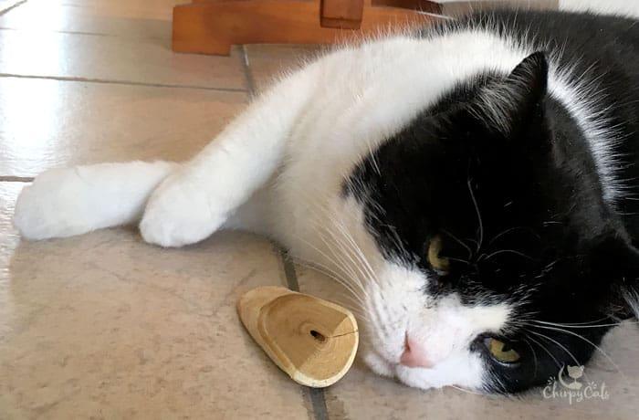 a cat lying on kitchen floor