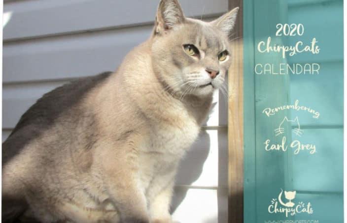2020 cat calendar featuring handsome grey cat