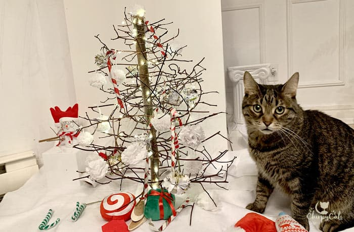 tabby cat sitting next to miniature kitty Christmas tree