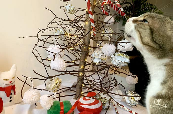 tabby cat enjoying the scent from the enrichment cat tys on display at the Christmas tree