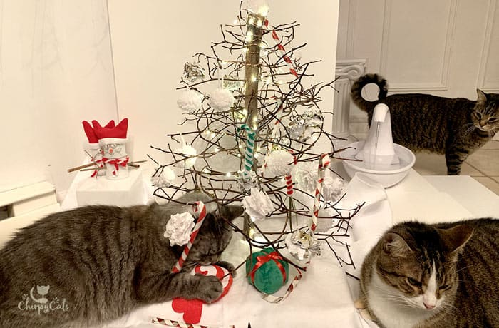 tabby cats relaxing at the Christmas tree enrichment display
