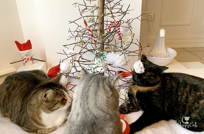 time sharing negotiations at the Chrsitmas tree with multiple cats
