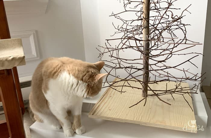 ginger and white cat at the cat christmas DIY tree