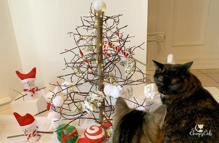 cats looking at the assortment of cat toys at the Christmas tree