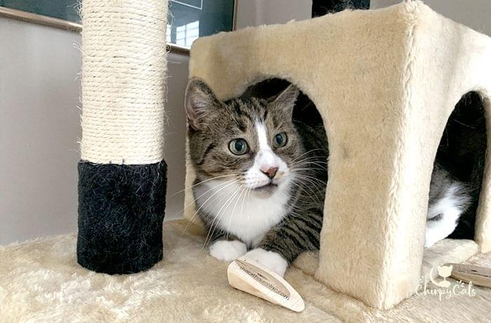 cat sitting in cat tree cat cave