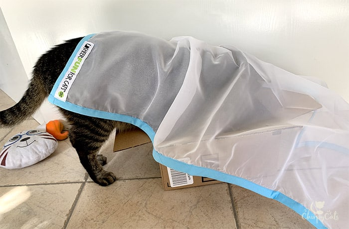 cat hiding under a sheer fabric cat toy called Sheer Fun for Cats