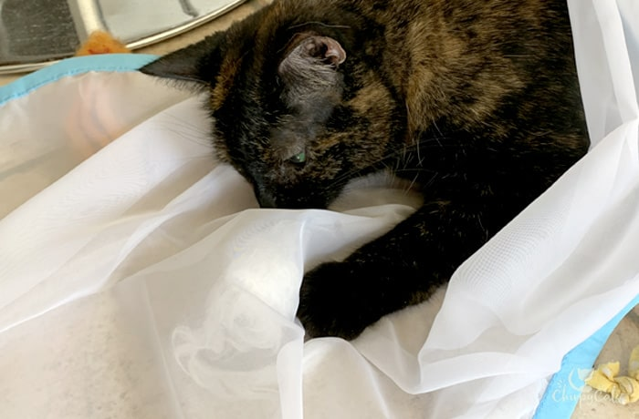 Tortie cat plays with hidden toys under sheer fun for cat fabric