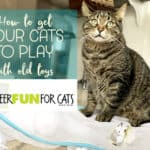 Bring your cat's toys back to life with Sheer Fun for Cats