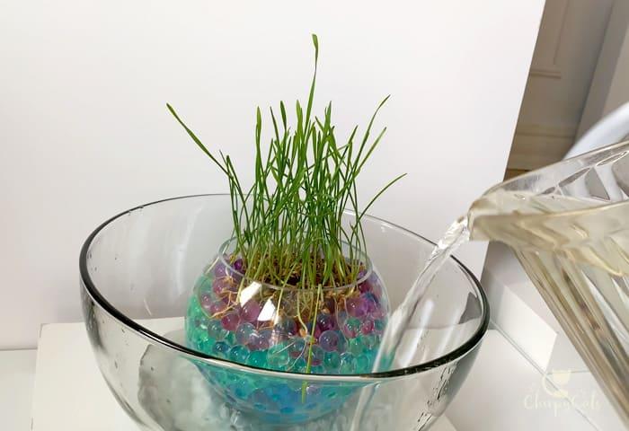 how to make a cat grass pond