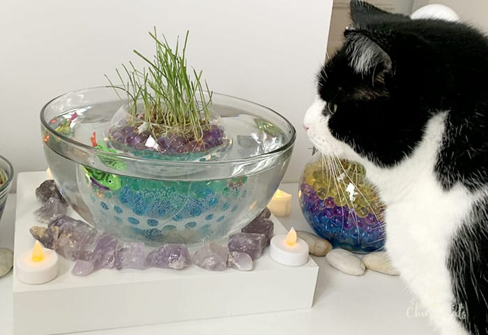 how to make a cat grass pond for your cat