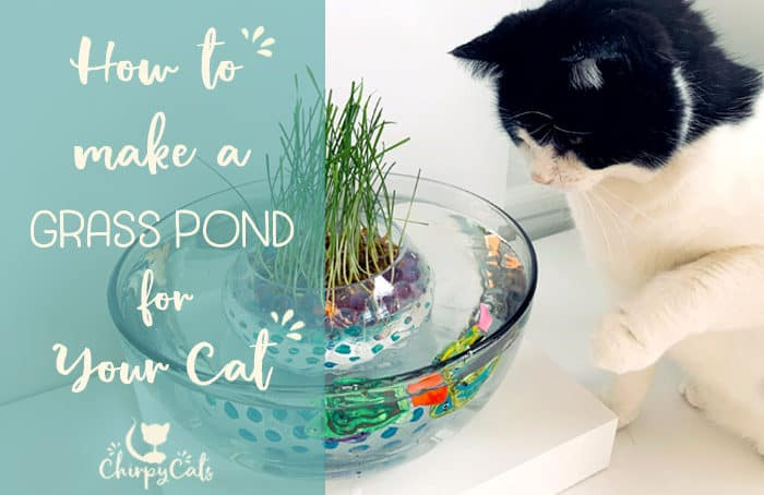 cat grass pond with water beads and robot fish