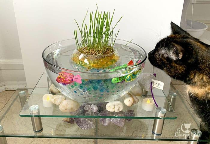 curious cat staring at robot fish