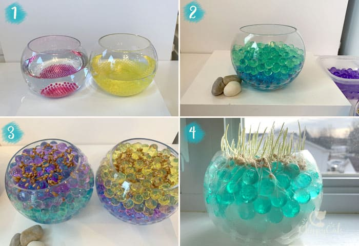 how to grow cat grass using water beads