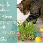 How to Engage your Cat's Foraging Instincts With This Fun Cat Food Puzzle